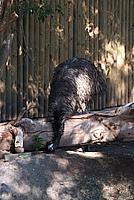 Foto Vacanza Roma - Zoo Roma_588