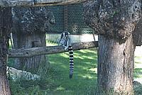 Foto Vacanza Roma - Zoo Roma_589