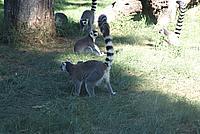 Foto Vacanza Roma - Zoo Roma_590