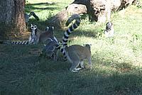 Foto Vacanza Roma - Zoo Roma_591