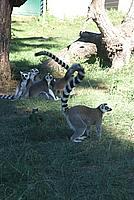 Foto Vacanza Roma - Zoo Roma_592