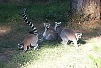 Foto Vacanza Roma - Zoo Roma_593