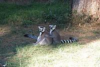 Foto Vacanza Roma - Zoo Roma_594