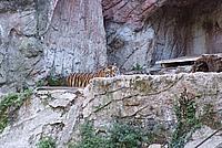 Foto Vacanza Roma - Zoo Roma_596