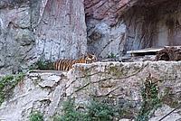 Foto Vacanza Roma - Zoo Roma_597
