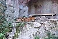 Foto Vacanza Roma - Zoo Roma_598