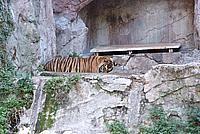 Foto Vacanza Roma - Zoo Roma_599