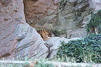 Foto Vacanza Roma - Zoo Roma_600