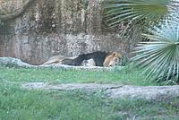 Foto Vacanza Roma - Zoo Roma_601
