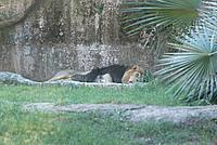 Foto Vacanza Roma - Zoo Roma_602