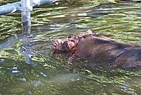 Foto Vacanza Roma - Zoo Roma_604