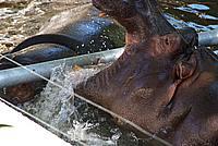 Foto Vacanza Roma - Zoo Roma_605