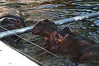 Foto Vacanza Roma - Zoo Roma_606