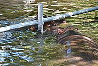 Foto Vacanza Roma - Zoo Roma_607
