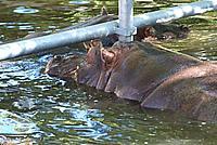 Foto Vacanza Roma - Zoo Roma_608