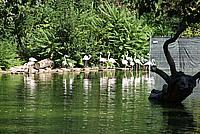 Foto Vacanza Roma - Zoo Roma_609