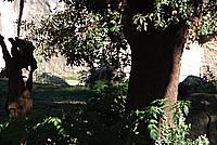 Foto Vacanza Roma - Zoo Roma_611