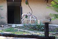 Foto Vacanza Roma - Zoo Roma_612