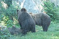 Foto Vacanza Roma - Zoo Roma_613