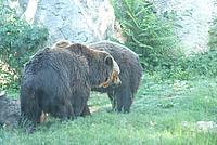 Foto Vacanza Roma - Zoo Roma_614