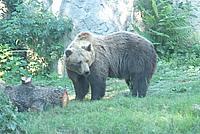 Foto Vacanza Roma - Zoo Roma_615