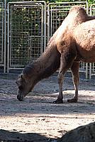 Foto Vacanza Roma - Zoo Roma_619