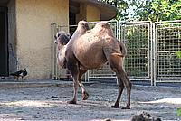 Foto Vacanza Roma - Zoo Roma_621