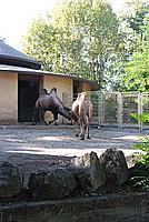Foto Vacanza Roma - Zoo Roma_622