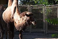 Foto Vacanza Roma - Zoo Roma_624