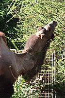 Foto Vacanza Roma - Zoo Roma_625