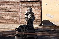 Foto Vacanza Roma - Zoo Roma_627