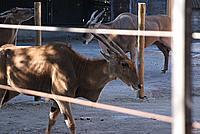 Foto Vacanza Roma - Zoo Roma_628