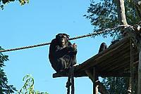 Foto Vacanza Roma - Zoo Roma_632