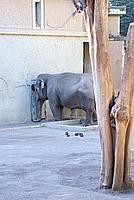 Foto Vacanza Roma - Zoo Roma_635