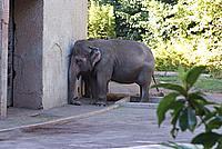 Foto Vacanza Roma - Zoo Roma_636