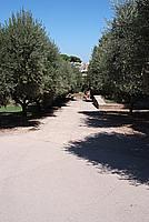 Foto Vacanza Roma Roma_136