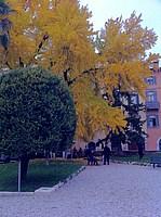 Foto Verona 2010 Verona_036