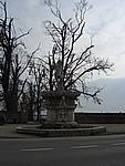 Foto Vicenza Vicenza_268